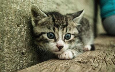 Proč má kočky záškuby kožichu na zádech? Důvod vás překvapí!