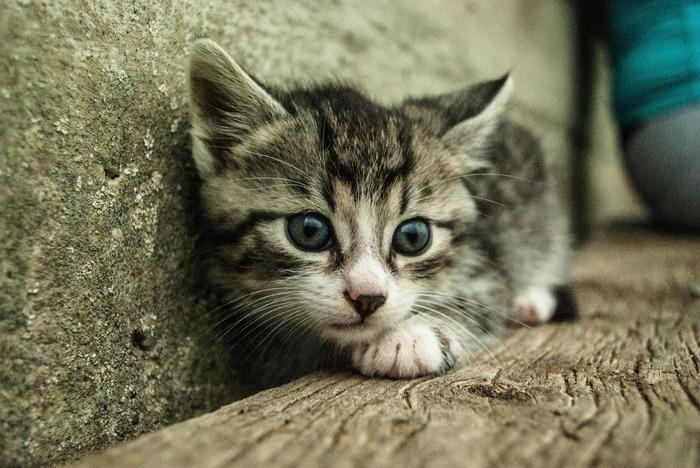 Kastrace toulavé kočky