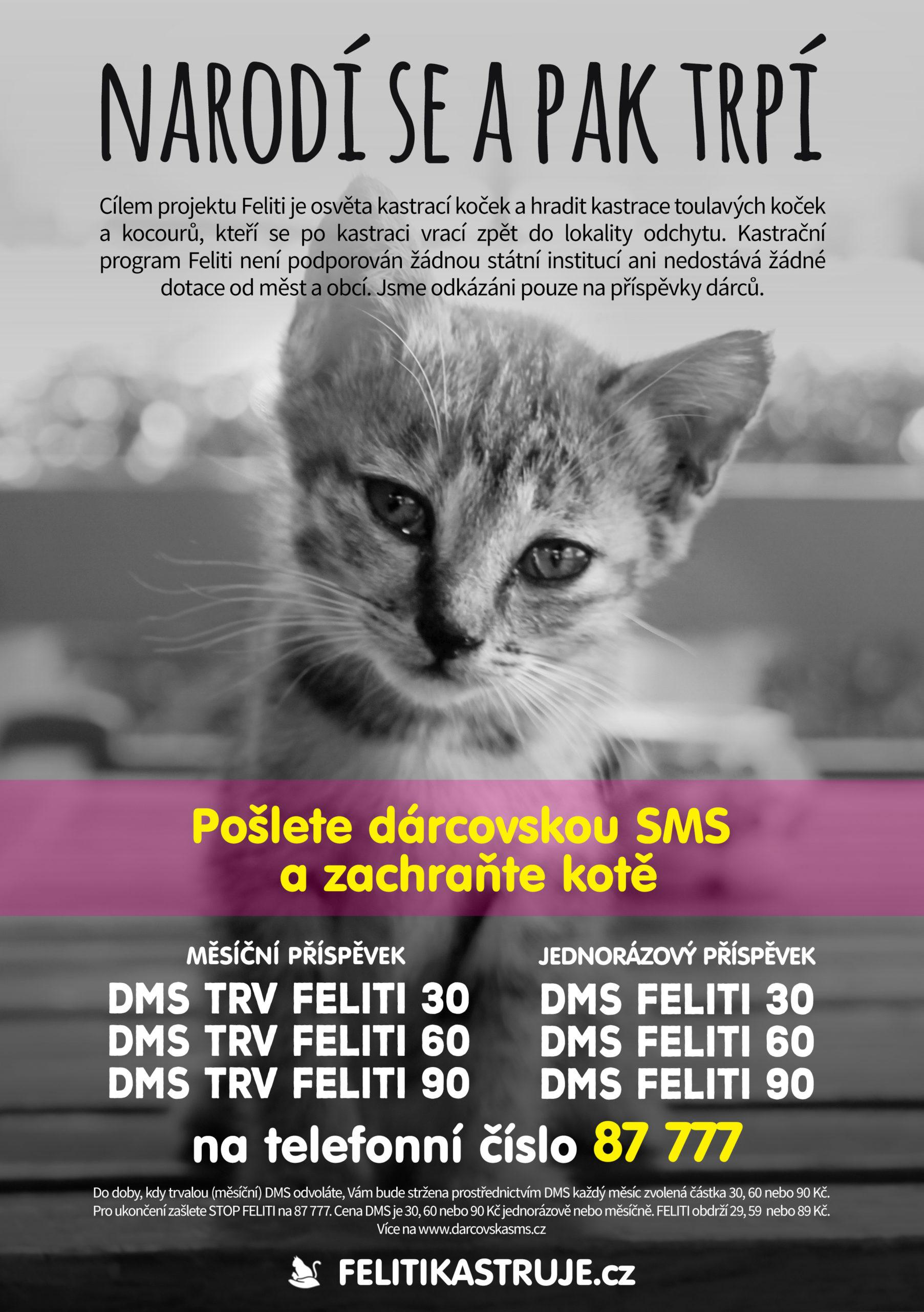 Leták - DMS kastrace koček