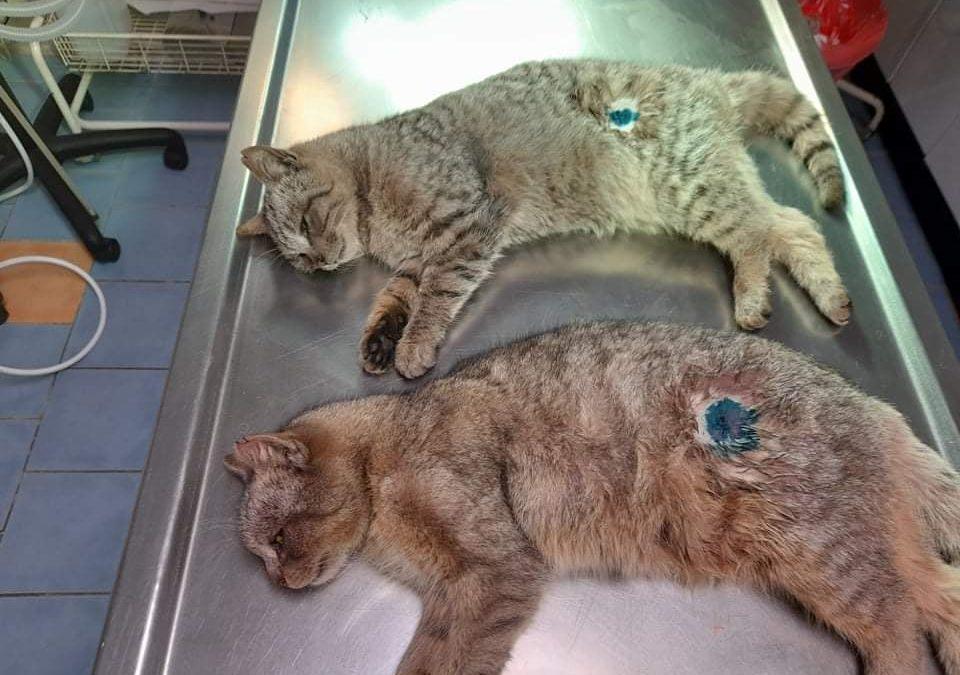 PROJEKT FELITI KASTRUJE – PŘÍBĚH č. 5727-5728  Kočičky byl...