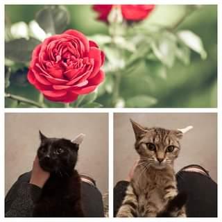 Může jít o obrázek cat , rose a outdoors